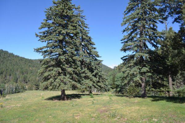 25 Mamaw St, Cloudcroft, NM 88317 -  $1,100,000