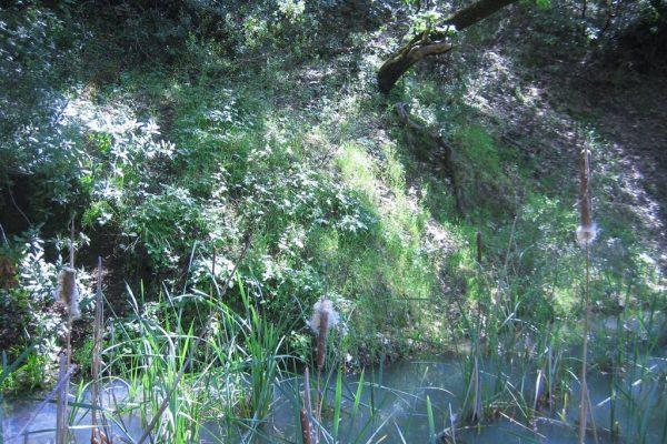 29730 River Rd, Cloverdale, CA 95425 -  $1,100,000