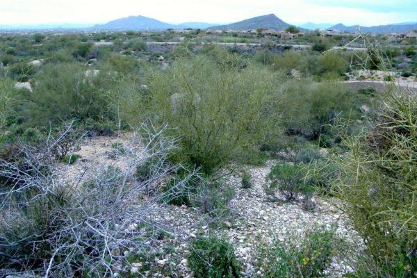 11104 E Carefree Way, Scottsdale, AZ 85262 -  $1,095,000